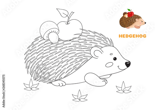 Hedgehog. Coloring Book Page For Preschool Children With Colorful Hedgehog,apple,mushroom  And Outlines To Color. Vector Illustration For Kids Education And Child  Development. Cute Animal. Stock Vector Adobe Stock