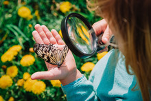 Little Girl Looking At Butterfy, Kids Learning Nature