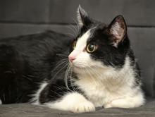 Cross-eyed Funny Cat