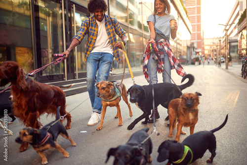 couple dog walker with group of dogs enjoying in walk..