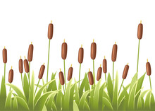 Reeds In Green Grass. Reed Plant. Green Swamp Cane Grass. Flat Vector Illustration Isolated On White Background. Clip Art For Decorate Swamp