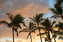 View Of Palm Tree Against Cloudy Sky During Sunset