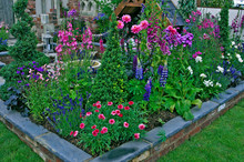 Detail Of Colourful Planting In A Raised Bed With Dahlias And Lupins