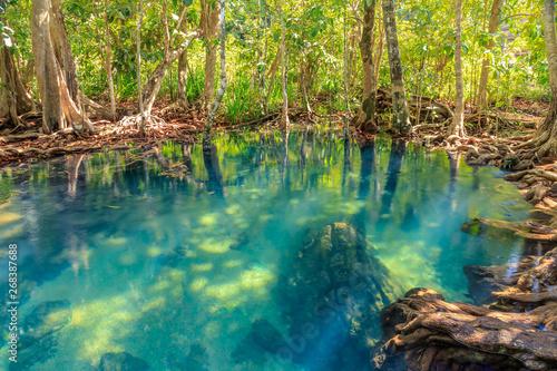 Cuadros en Lienzo Mangrove and crystal clear water stream canal at Tha Pom Klong Song Nam mangrove