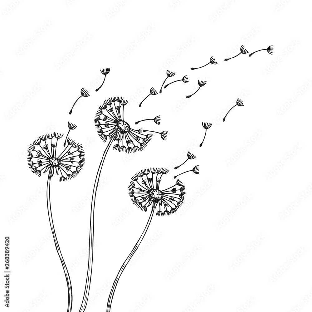 Fototapety, obrazy: Dandelion silhouettes. Dandelions grass pollen delicate plant seeds blowing wind fluff flower abstract vector spring graphics. Illustration of fluff dandelion, blossom flora