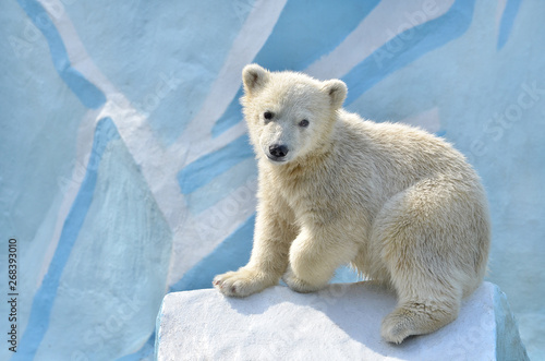 Photo sur Toile Ours Blanc polar bear