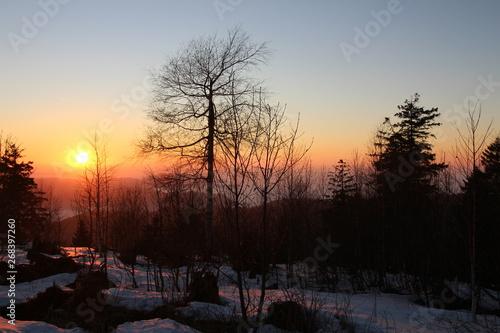 Foto op Plexiglas Aubergine Winter im Schwarzwald