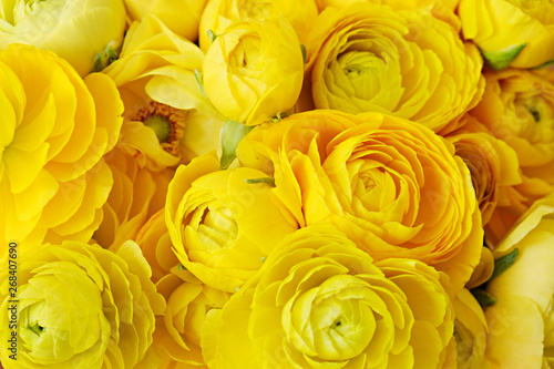 Cuadros en Lienzo Macro shot of beautiful bouquet of yellow ranunculus flowers with visible petal texture structure