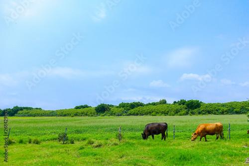 Fototapeta 黒島の風景 obraz