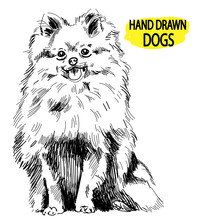 Pomeranian. Drawing By Hand In Vintage Style. Dog Breeds. Fluffy Dog Sitting.
