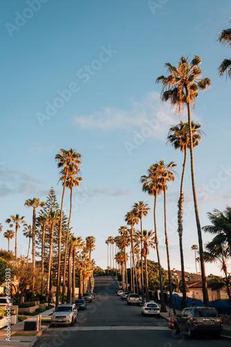 In de dag Los Angeles Palm trees and street near Windansea Beach, in La Jolla, San Diego, California