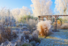 Garten Im Winter - Garden In W...