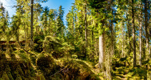 Ycke Forest
