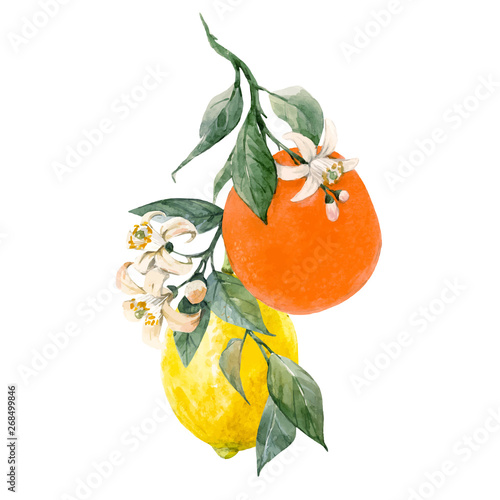 Watercolor citrus fruits vector illustration Fototapete