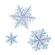 canvas print picture - Three snowflakes isolated on white background. Macro photo of real snow crystals: elegant stellar dendrites with ornate shapes, hexagonal symmetry, glossy relief surface and complex details inside.