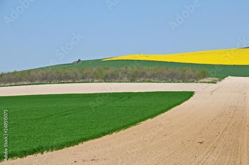 Obraz na plátně  Campagna e campi di colza a a hervelinghen, Pas-de-Calais, Hauts-de-France