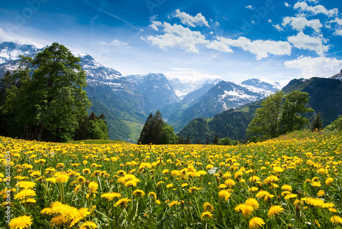 Foto op Aluminium Weide, Moeras field of yellow flowers