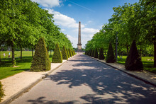 Tree Lined Avenue In Glasgow Green With Nelsons Monument At The End