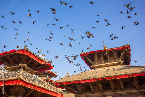 Photo  a flock of gray pigeons flying in a clear blue sky over the red roofs of ancient