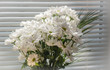 White flowers macro