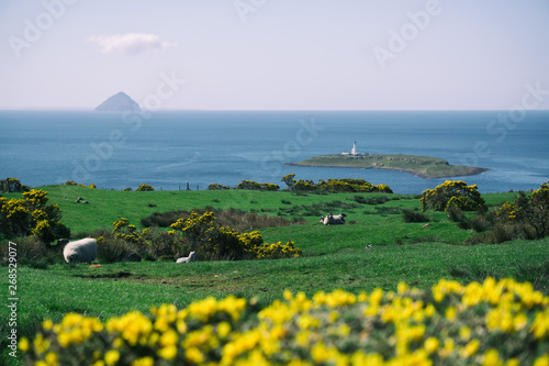 Photo Sheep on the grass in Kildonan, Isle of Arran, Scotland.