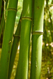 bamboo, young, stem, grows, green, park, grove,