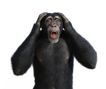 Shocked Chimp
