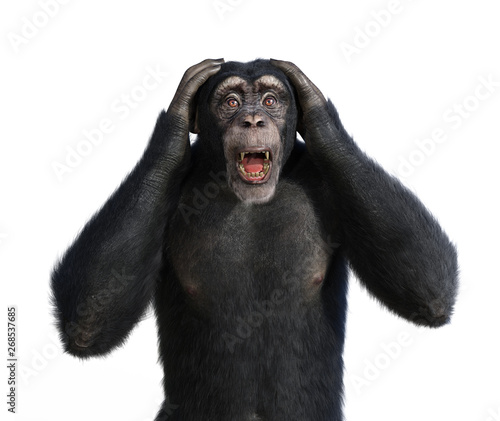 Canvas Print Shocked Chimp