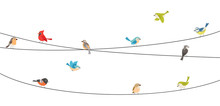 Colorful Birds Sitting On Wire Isolated On White