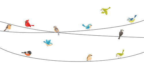 Panel Szklany Ptaki Colorful birds sitting on wire isolated on white