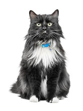 Funny It Is Black A White Cat Sits And Looks In The Camera. On It The Collar Is Put On. The Background Is Isolated.