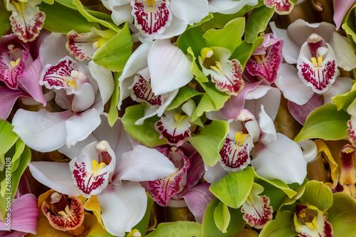 Orchids Petals Pattern