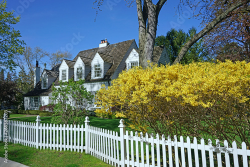 Photo Spring scene with blooming yellow forsythia bush and house with white picket fen