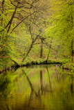 Stunning peaceful Spring landscape image of River Teign flowing through lush green forest in English countryside - 268614400