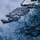 Unusual abstract landscape image of trees reflected in river with rock providing contrast - 268614805