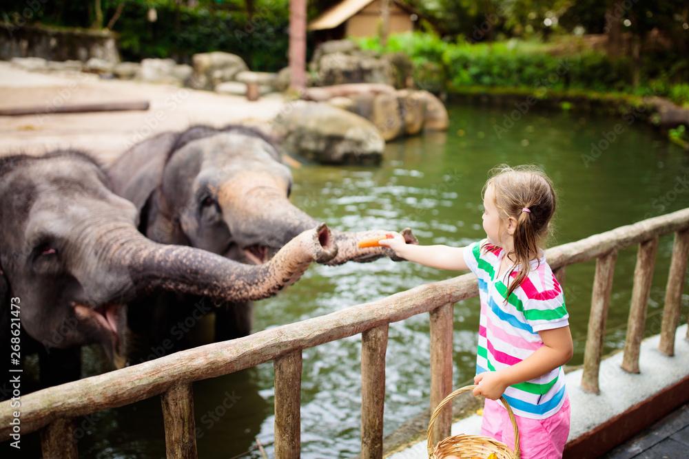 Fototapeta Kids feed elephant in zoo. Family at animal park.