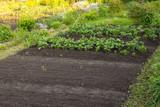 Mały ogórdek warzywny. Działka rekreacyjna.