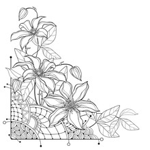 Corner Bouquet With Outline Clematis Or Traveller's Joy Ornate Flower Bunch, Bud And Leaf In Black Isolated On White Background.
