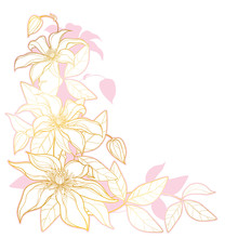 Corner Bouquet With Outline Clematis Or Traveller's Joy Ornate Flower Bunch, Bud And Leaves In Gold And Pink Isolated On White Background.