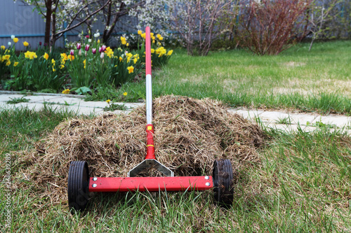 Roller moss removal rake at a heap of dethatched lawn grass