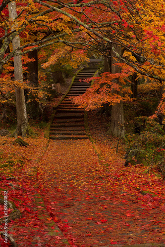 Canvas Prints Cuban Red Colorful autumn leaves of Ryoon-ji temple , Sonobe, Nantan city, Kyoto prefecture, Japan.