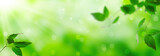 Fresh green leaves on a shiny background - 268652489