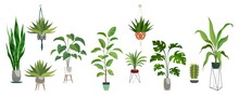 Pot Plant Set. Plants Plastic Decorative Container And Hanging Styling Indoor Basket For Potting Tree Vector Collection