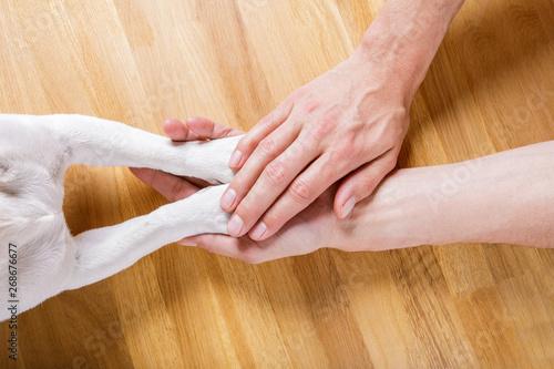 Cadres-photo bureau Chien de Crazy dog and owner handshaking