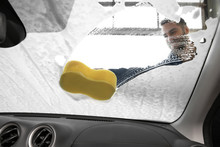 Worker Cleaning Automobile Windshield With Sponge At Car Wash, View From Inside