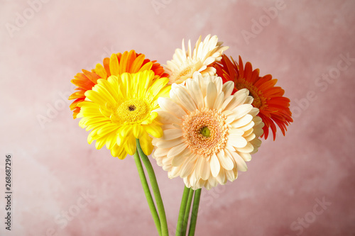 Fototapety, obrazy: Bouquet of beautiful bright gerbera flowers on color background