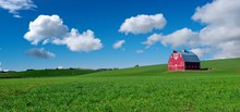 Red Barn In A Green Field Of W...
