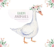 Farms Animal Isolated Set. Cute Domestic Farm Pets Watercolor Illustration. Goose Baby Cartoon Drawing.