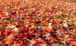 canvas print picture - Colorful Autumn Leaves on the ground