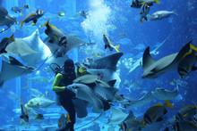 Diver Feeds Sea Fish And Stingrays In A Large Aquarium